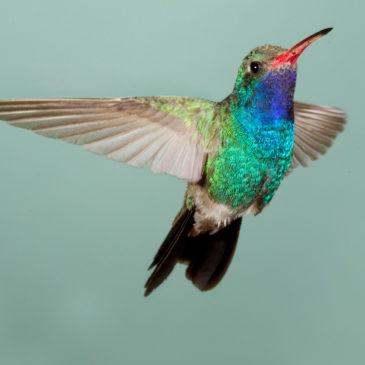 La dématérialisation : un acte colibri ?